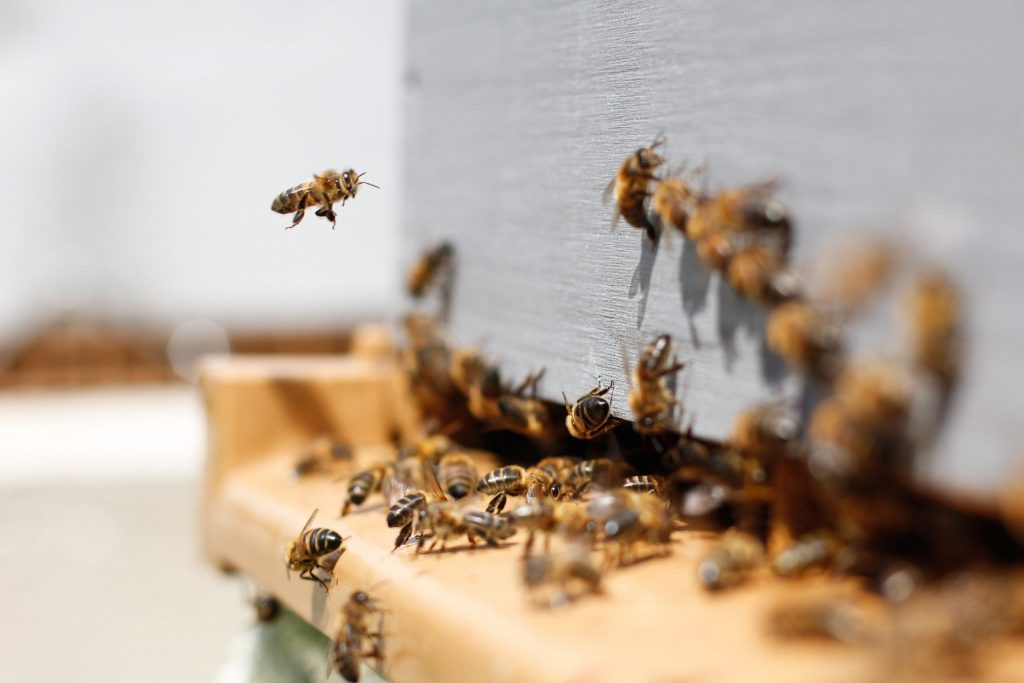 Community beehive at Elements
